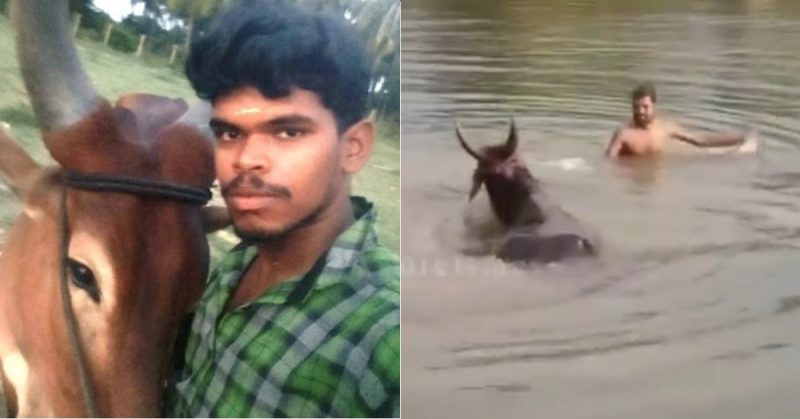 Coimbatore man drowns while filming TikTok with his bull