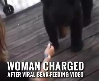 Virginia Woman Facing Charges After Feeding Bear in Gatlinburg